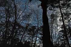 夜の青木ヶ原樹海サイレントハイク