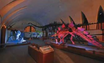 恐竜ナイトツアー@東海大学自然史博物館